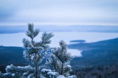 Abete sulla montagna vista del lago nell'inverno Fotografie Stock Libere da Diritti