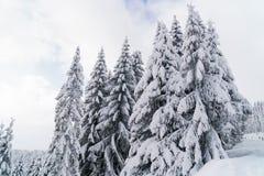 Abeti coperti da neve in montagne Paesaggio del paese delle meraviglie di inverno Immagini Stock