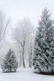 Abeti coperti di neve nella foresta in La di inverno della nebbia spessa Fotografia Stock Libera da Diritti