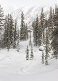 Abeti della montagna di Teton e derive della neve Fotografia Stock Libera da Diritti
