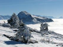 Abeti di inverno immagini stock libere da diritti