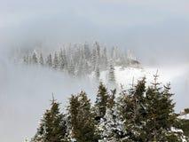 Abeti di inverno fotografie stock