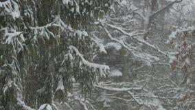 Abeti di nevicata video d archivio