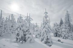 Abeti di Snowy con gli oggetti di Natale Fotografia Stock Libera da Diritti