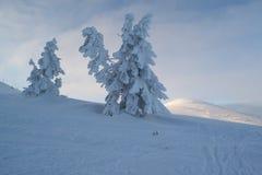 Abeti e cespugli del paesaggio di inverno nella neve Immagini Stock Libere da Diritti