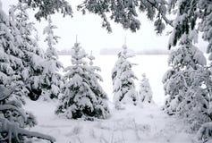Abeti ed inverno Fotografie Stock Libere da Diritti
