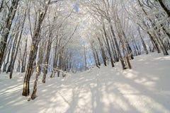 Abeti innevati di inverno sul fianco di una montagna sul backgr del cielo blu Fotografie Stock