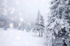 abeti innevati in precipitazioni nevose pesanti - fondo di Natale fotografia stock