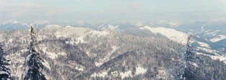 Abeti innevati sui precedenti delle montagne Fotografie Stock