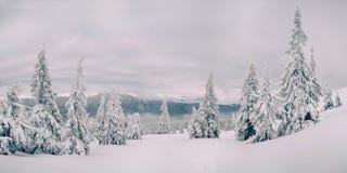 Abeti magici coperti da neve in montagne Immagine Stock Libera da Diritti