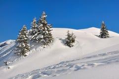 Abeti nella neve Fotografia Stock Libera da Diritti