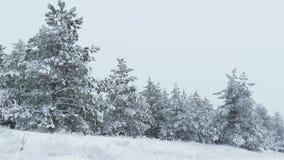 Abeti nella nevicata selvaggia della foresta di inverno di Natale della neve stock footage