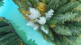 Abeti rossi asciutti di vista aerea del lago Immagine Stock