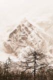 Abeti rossi bianchi maestosi che emettono luce dalla luce solare Alberi coperti di neve lanuginosa bianca gelida un bello giorno, immagini stock libere da diritti