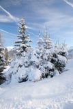 Abeti rossi di Snowy in montagna Immagini Stock Libere da Diritti
