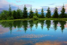 Abeti rossi intorno al lago della montagna con la riflessione nell'acqua Fotografia Stock