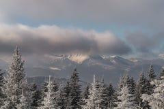 Abeti rossi, nuvole e picchi di montagna nell'inverno Fotografie Stock