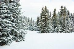 Abeti sulla montagna di inverno Immagine Stock