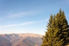 Abeti in un giorno soleggiato Picchi di montagne nei precedenti immagini stock