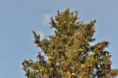 Abeto adornado de la Navidad en el cielo azul Foto de archivo