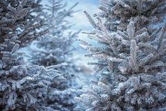 Abeto coberto de neve artificial na cidade Marselha Ramo da árvore de abeto coberto com a neve, fim acima geadas afiadas foto de stock