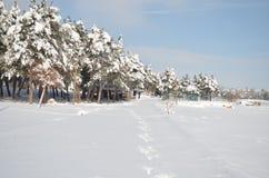 Abeto con un casquillo de la nieve en invierno Fotografía de archivo libre de regalías