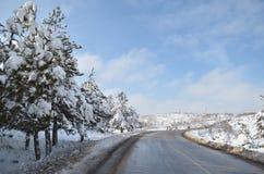 Abeto con un casquillo de la nieve en invierno cerca del camino Imágenes de archivo libres de regalías