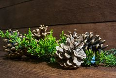 Abeto-cones e árvore de abeto na madeira imagem de stock royalty free