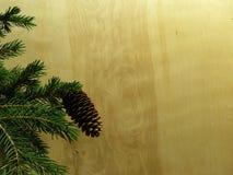 Abeto-cono Imágenes de archivo libres de regalías