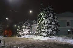 Abeto cubierto con nieve, en la ciudad Ulyanovsk (Rusia) de la calle de la noche Foto de archivo libre de regalías