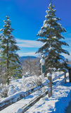Abeto de 2 inviernos Fotografía de archivo