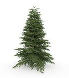 Abeto del árbol de navidad Fotografía de archivo