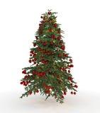 Abeto del árbol de navidad Imagenes de archivo