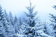 Abeto del invierno fotografía de archivo
