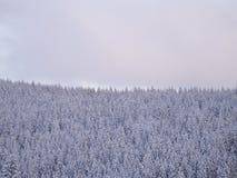 Abeto del paisaje del invierno Fotos de archivo