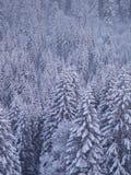 Abeto del paisaje del invierno Fotografía de archivo
