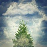 Abeto do inverno Imagens de Stock Royalty Free