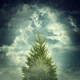 Abeto do inverno Fotos de Stock