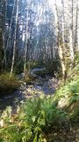 Abeto e floresta frondosa Foto de Stock Royalty Free