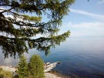 Abeto en la orilla del lago fotos de archivo
