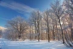 Abeto frio da neve da paisagem da floresta do inverno foto de stock royalty free