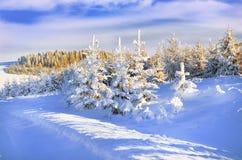 Abeto nevado Fotografía de archivo libre de regalías