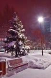 Abeto nevado en el parque Imagen de archivo