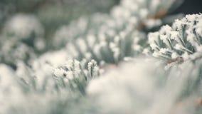 Abeto nevado en un primer del parque del invierno almacen de metraje de vídeo