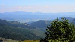 Abeto no fundo da paisagem bonita com montanhas filme