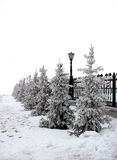 Abeto Snow-clad Imagem de Stock Royalty Free
