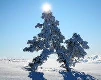 Abeto solo en un campo de nieve. Imágenes de archivo libres de regalías