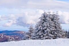Abeto vermelho da neve imagem de stock royalty free