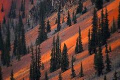 Abeto vermelho e minerais foto de stock