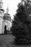 Abeto vermelho no território do monastério Foto de Stock Royalty Free